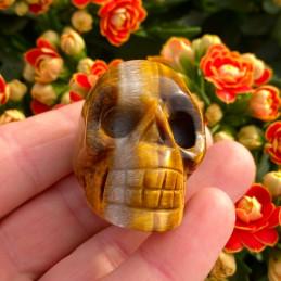 Tigerøje_skull